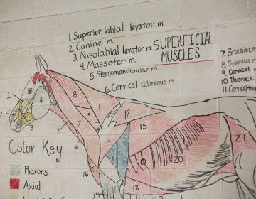 Teaching diagrams line the walls of the riding arena at Midway University. (Noah Adams/NPR)