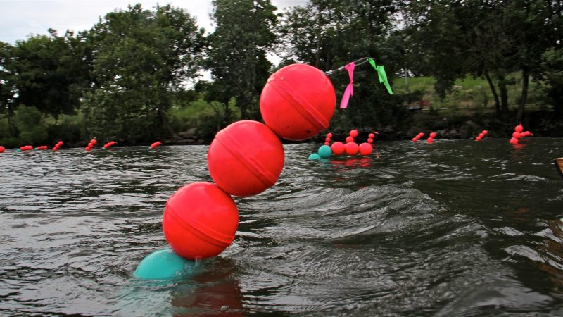 Brightly colored buoys show the rise and fall of the tides along the Schuylkill River. (Emma Lee/WHYY)