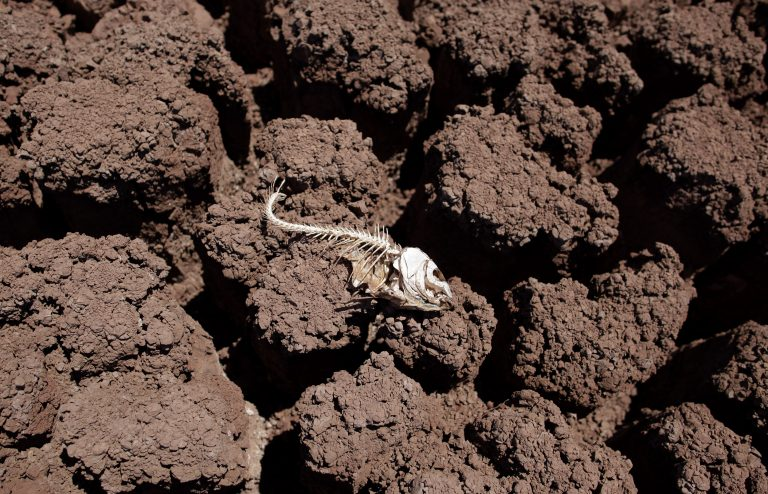 The remains of a dead fish lies on the dried bed of Lake Colorado City near Colorado City, Texas