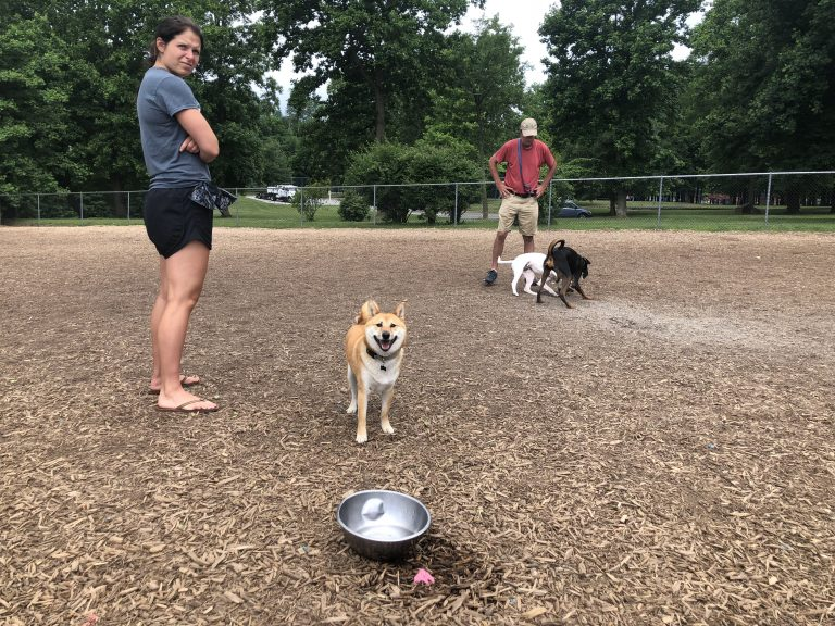Owners watch as their dogs play Tuesday at Talley Day Bark Park north of Wilmington. No leashes are required at bark parks. (Shirley Min/WHYY)