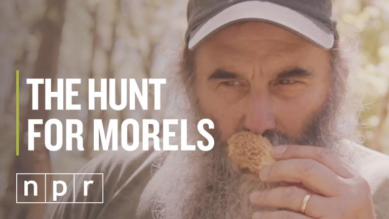 Nick Spero hunts for morel mushrooms somewhere in Maryland (NPR)