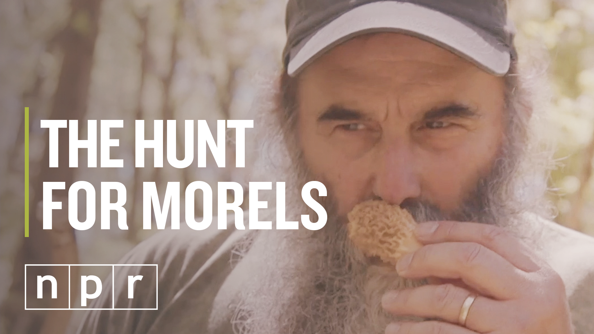 Hunting for morels, the most delectable mushroom of the forest