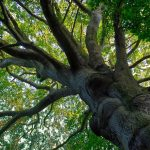 Do Trees NEED Mulch? & Can a Tree Survive Severed Roots?