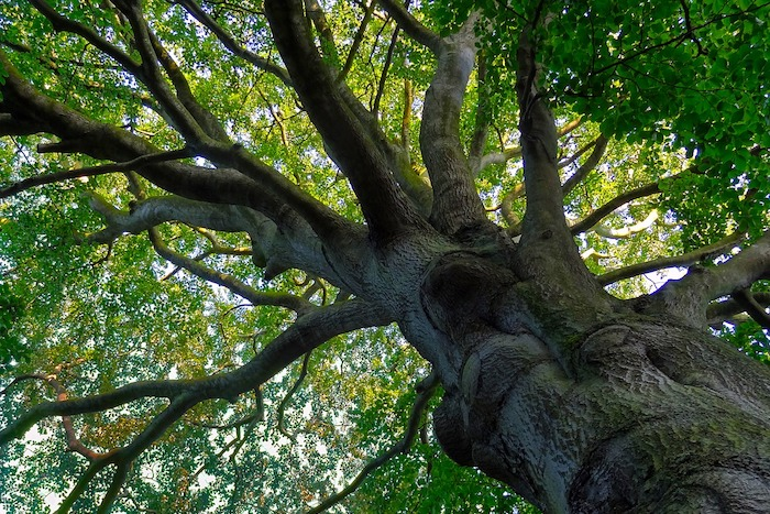 Do Trees NEED Mulch? & Can a Tree Survive Severed Roots? : You Bet ...