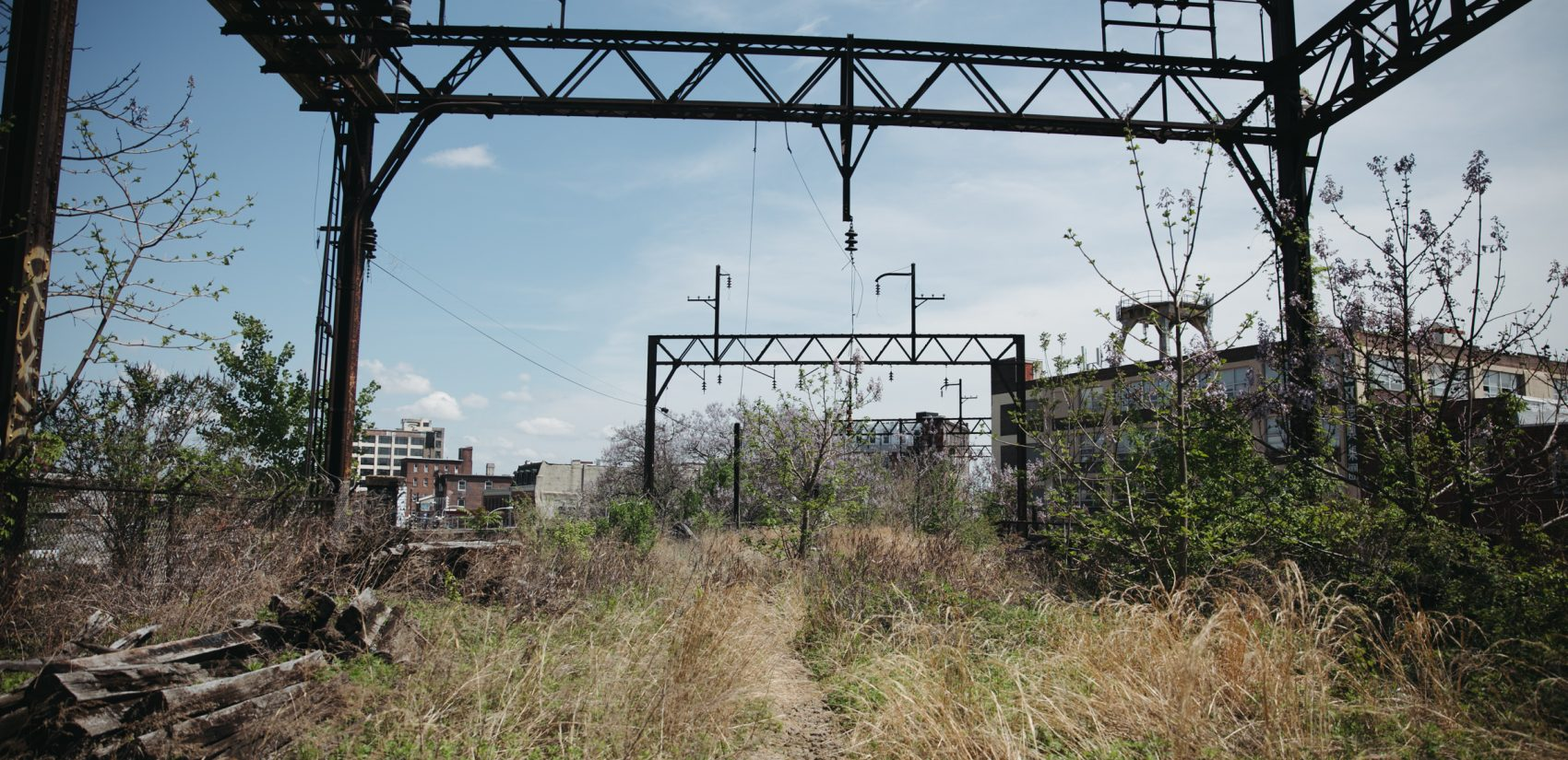Much of the Reading viaduct remains a feral landscape. It is owned by Reading International. (Neal Santos for PlanPhilly)