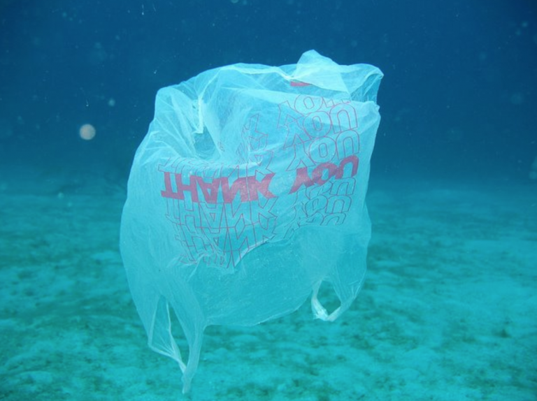 An underwater single-use plastic carryout bag. (Clean Ocean Action image)