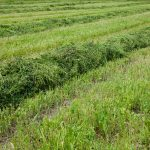 Using Grass Clippings for Mulch