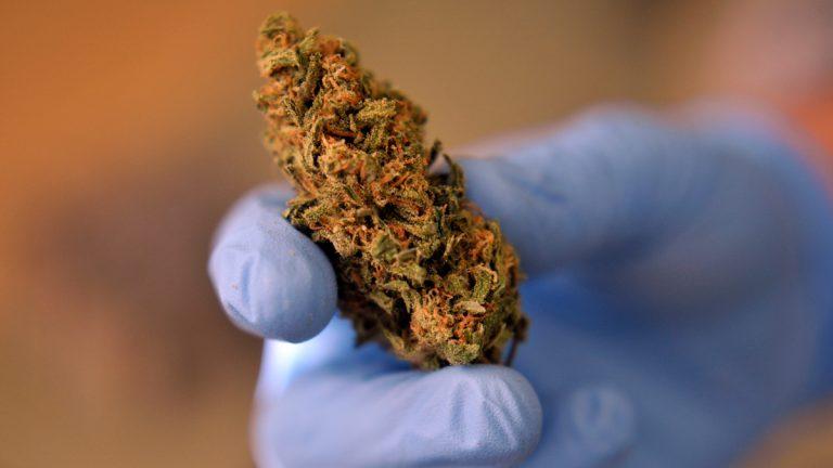 A dispensary employee holds a medical marijuana flower,