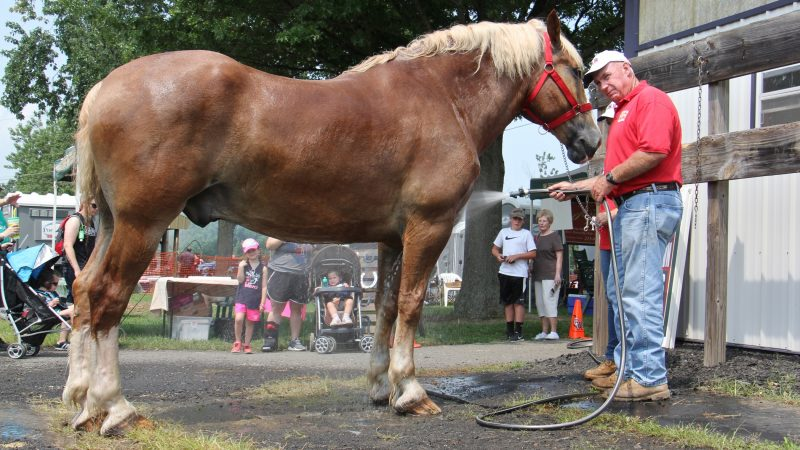Hutch Hamilton of Newtown cools of his Belgian draft horse, Bubba, at the Middletown Grange Fair. (Emma Lee/WHYY)