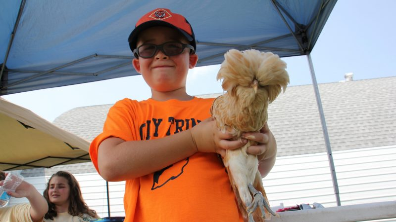 Scott Frank, 7, of Morrisville, announces his intention to raise buff laced Polish chickens after meeting one at the Middletown Grange Fair. (Emma Lee/WHYY)