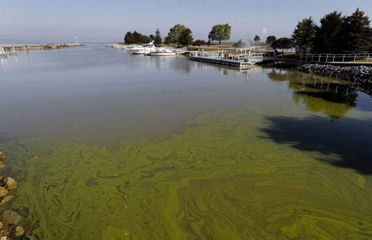 Algae floats in the water at the Maumee Bay State Park marina in Lake Erie in Oregon, Ohio. (Paul Sancya/AP Photo)