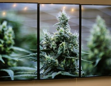 Photographs of marijuana plants are on the wall during an open house and media availability for the opening of CY+ Medical marijuana Dispensary, Thursday, Feb. 1, 2018 in Butler, Pa.(AP Photo/Keith Srakocic)