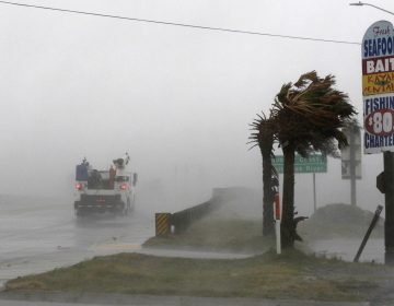 A work truck drives on Hwy 24 as the wind from Hurricane Florence blows palm trees in Swansboro N.C., Thursday, Sept. 13, 2018. (Tom Copeland/AP Photo)