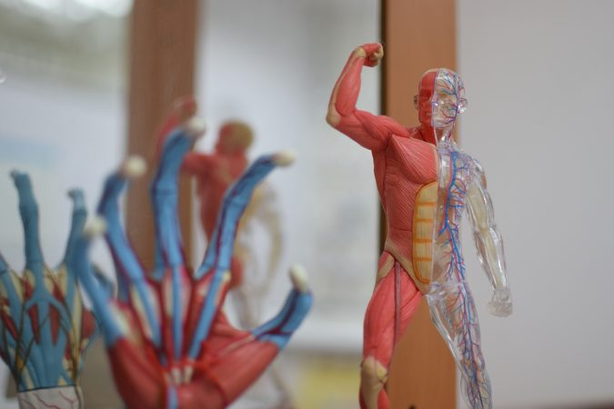 But Chinese medicine practitioners in Hong Kong also study western biomedicine, like human anatomy. Credit: Yik Lam Ng