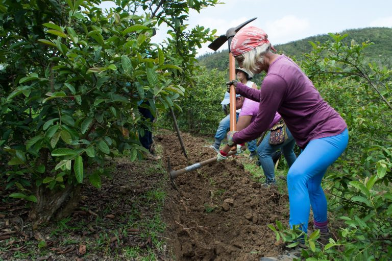The women farmers of the Circuito Agroecológico Aiboniteño work together to build a swale on a guava orchard. (Paige Pfleger/for WHYY)