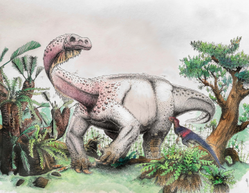 An artist's reconstruction of Ledumahadi mafube, which means
