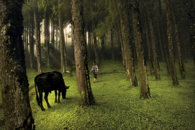 A man walks through a forest in Rethung Gonpa village outside of Trashigang, in east Bhutan, August 2007.