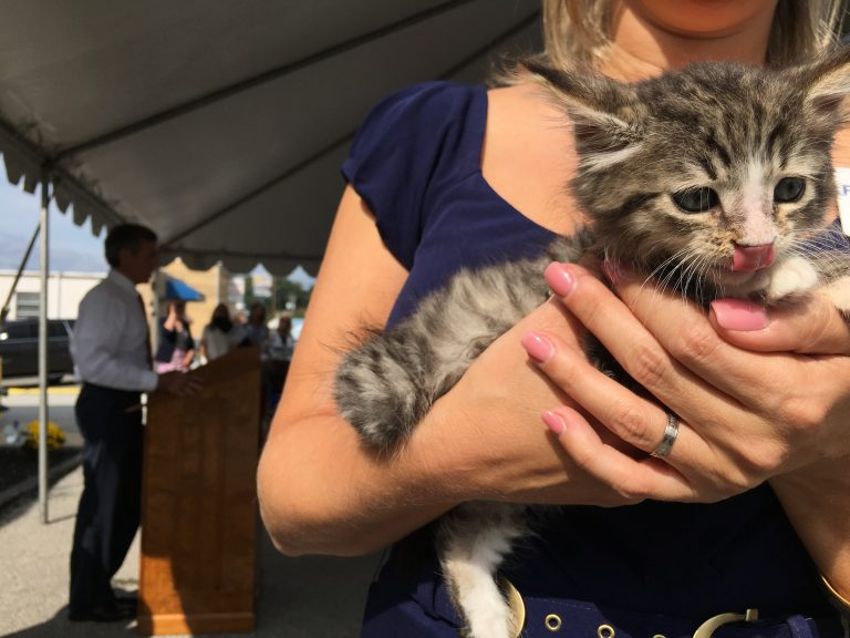 Faithful Friends Animal Society's Shannon O'Neill holds rescue kitten Hawkeye as Delaware Gov. John Carney talks about legislation designed to reduce the feral cat population. (Mark Eichmann/WHYY)
