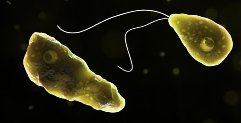 Naegleria fowleri. (CDC image)