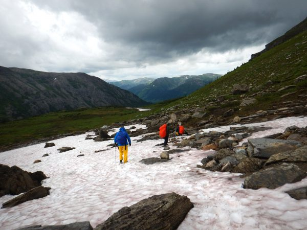 (From left to right) Robb Bennett, Darren Copley and Claudia Copley stop to look for spiders while hiking back to camp in an impending storm. (Molly Segal)