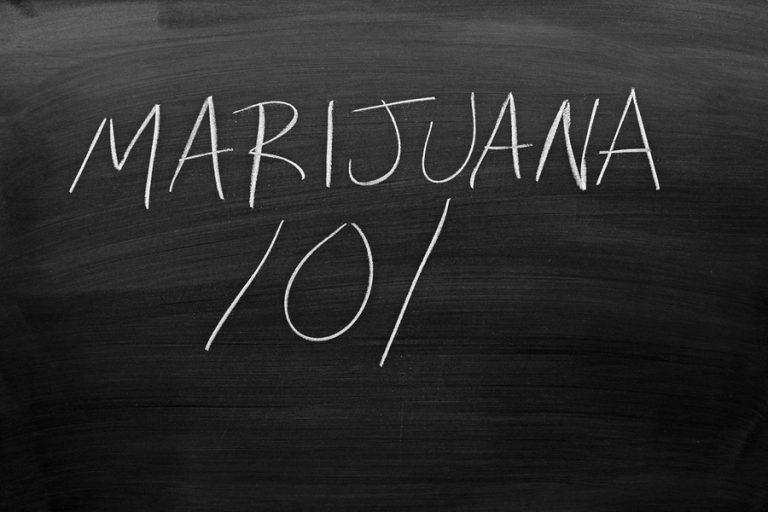 Stockton University's minor in cannabis studies will feature classes on cannabis law, economic botany, and business operations. (Big Stock image)