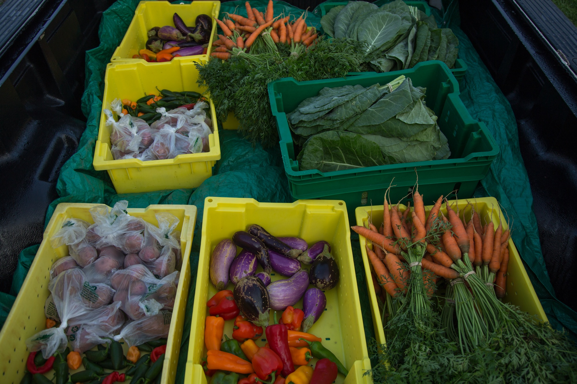 All produce grown at the Lankenau Hospital's Wellness Farm goes directly to the patients, free of charge, along with tips and recipes for healthy cooking.
