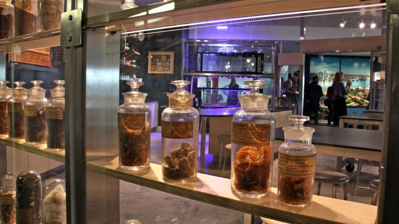 Antique glass jars containing natural products produced in Philadelphia decorate one wall of the classroom. The jars were obtained from the Philadelphia Commercial Museum when it closed in 1994. (Emma Lee/WHYY)