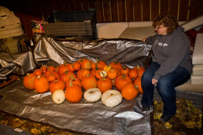 Lucia Kubik, a board member of the Indraloka Animal Sanctuary in central Pennsylvania,  collects pumpkins after Halloween to take for feed to the animals. (Kimberly Paynter/WHYY)