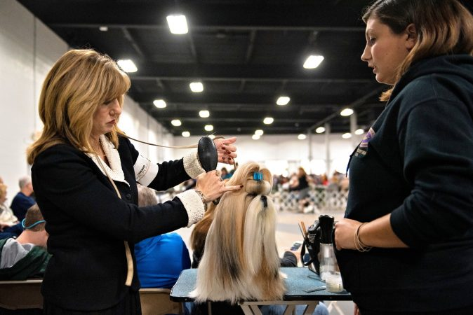 Michelle Jones and her daughter Mackenzie Jones prepare Mr. Bates, the No. 2 ranked shih tzu in the country, for the breed competition at the National Dog Show in Oaks, Pa. (Kriston Jae Bethel for WHYY)