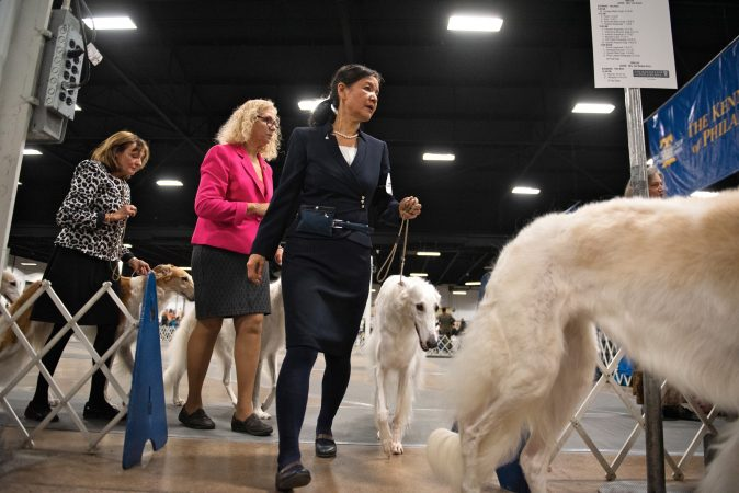 Handlers exit with their borzois following the breed competition at the National Dog Show in Oaks, Pa. (Kriston Jae Bethel for WHYY)