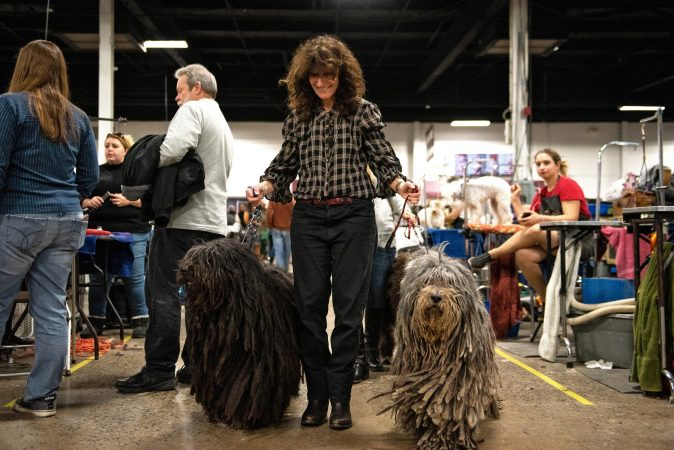 Donna Defalcis walks her two Bergamasco sheep dogs, Ravi and Whope, at the National Dog Show in Oaks, Pa. (Kriston Jae Bethel for WHYY)