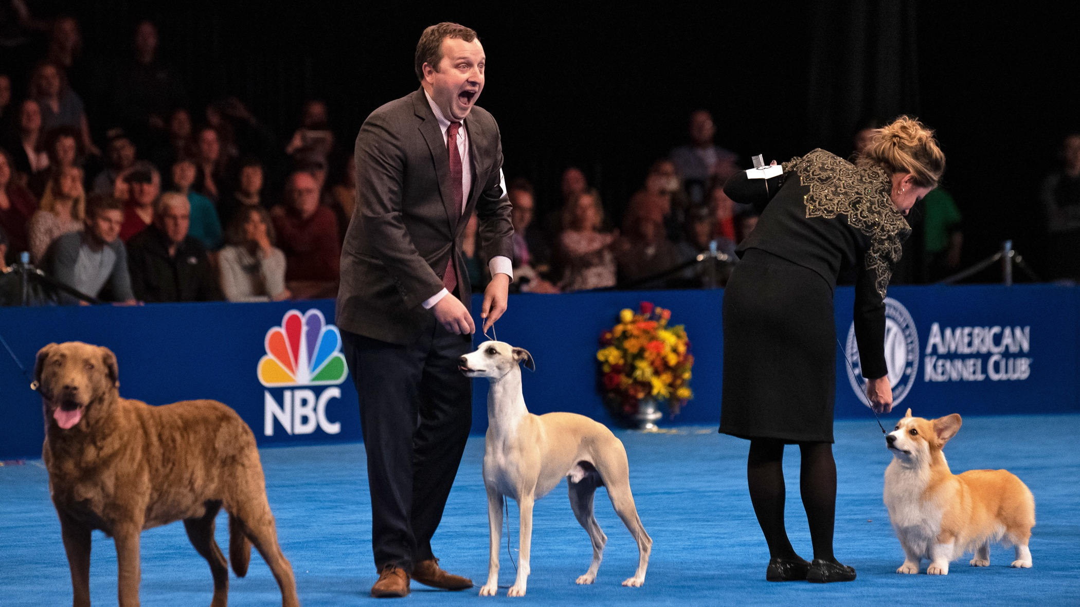 Justin Smithey reacts to the announcement that his 3-year-old whippet, Whiskey, won Best in Show at the National Dog Show in Oaks, Pa.