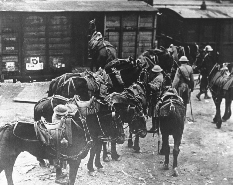 In this March 7, 1918 file photo, men of U.S. Battery E, 5th Field Artillery Battalion, 1st Infantry Division, load horses onto freight cars in Toul, eastern France, en route to the French front. They were messengers, spies, sentinels and the heavy haulers of World War I, carrying supplies, munitions and food and leading cavalry charges. The horses, mules, dogs and pigeons were a vital part of the Allied war machine, saving countless lives, and dying by the millions. (AP Photo, File)