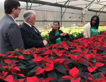 New Castle County Executive Matt Meyer and West End Neighborhood House executive director Paul Calistro listen as Bright Spot Farms director Sindhu Siva describes the work needed to grow poinsettias at the New Castle farm. (Mark Eichmann/WHYY)