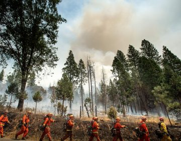Inmate firefighters battle a California wildfire in July. Qualified inmates can volunteer to be trained in firefighting; in exchange, they are paid $2 a day and an extra $1 per hour when fighting fires. The inmate firefighters also receive sentence reductions. (Noah Berger/AFP/Getty Images)