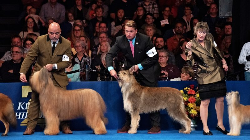 Handlers listen intently during the herding group competition at the National Dog Show in Oaks, Pennsylvania, on Nov. 17, 2018. (Kriston Jae Bethel for WHYY)
