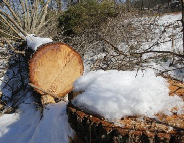 Downed trees mark the route of the Atlantic Coast Pipeline in Deerfield, Va., in February. A federal appeals court has blocked development of portions of the pipeline. (Steve Helber/AP)
