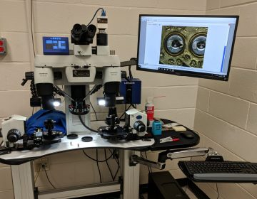This high-powered microscope allows Berks County investigators to compare marks on shell casings to see if there may be a connection between gun crimes in the area. (Rachel McDevitt/WITF)