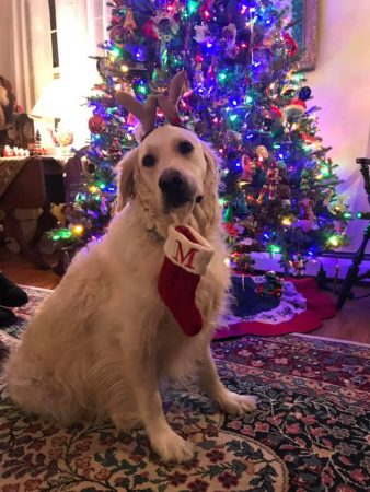 Minnie sits by the tree in Cape May. (Photo courtesy of Katie Morris)