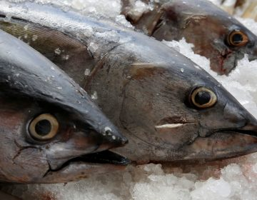 Tuna, seen on display last year at a fish market in Mexico City. The World Trade Organization dealt Mexico a defeat on appeal Friday, dismissing the country's argument that labeling regulations in the U.S. violated WTO rules. (Henry Romero/Reuters)