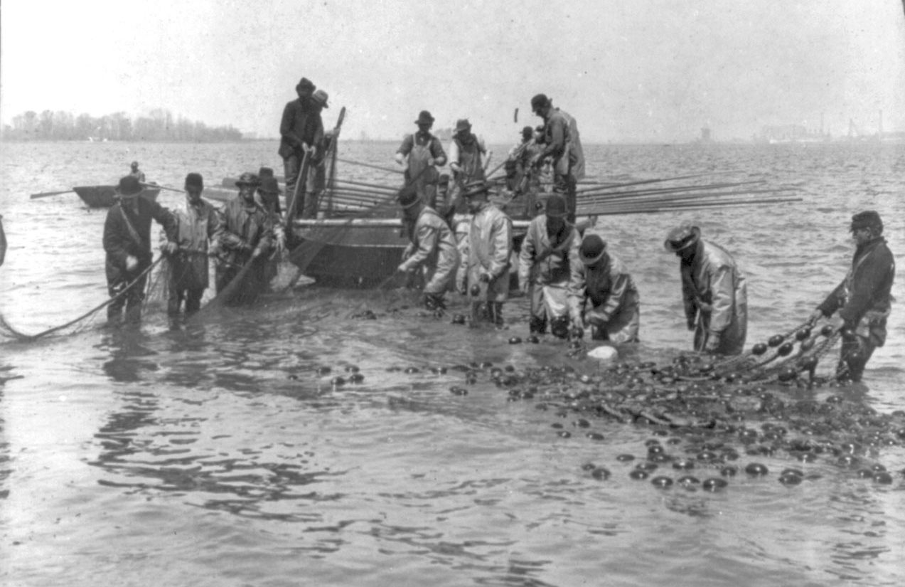 Shad fishermen loading their half-mile of net on the Delaware River in Philadelphia. (Library of Congress, 1905 ca.)