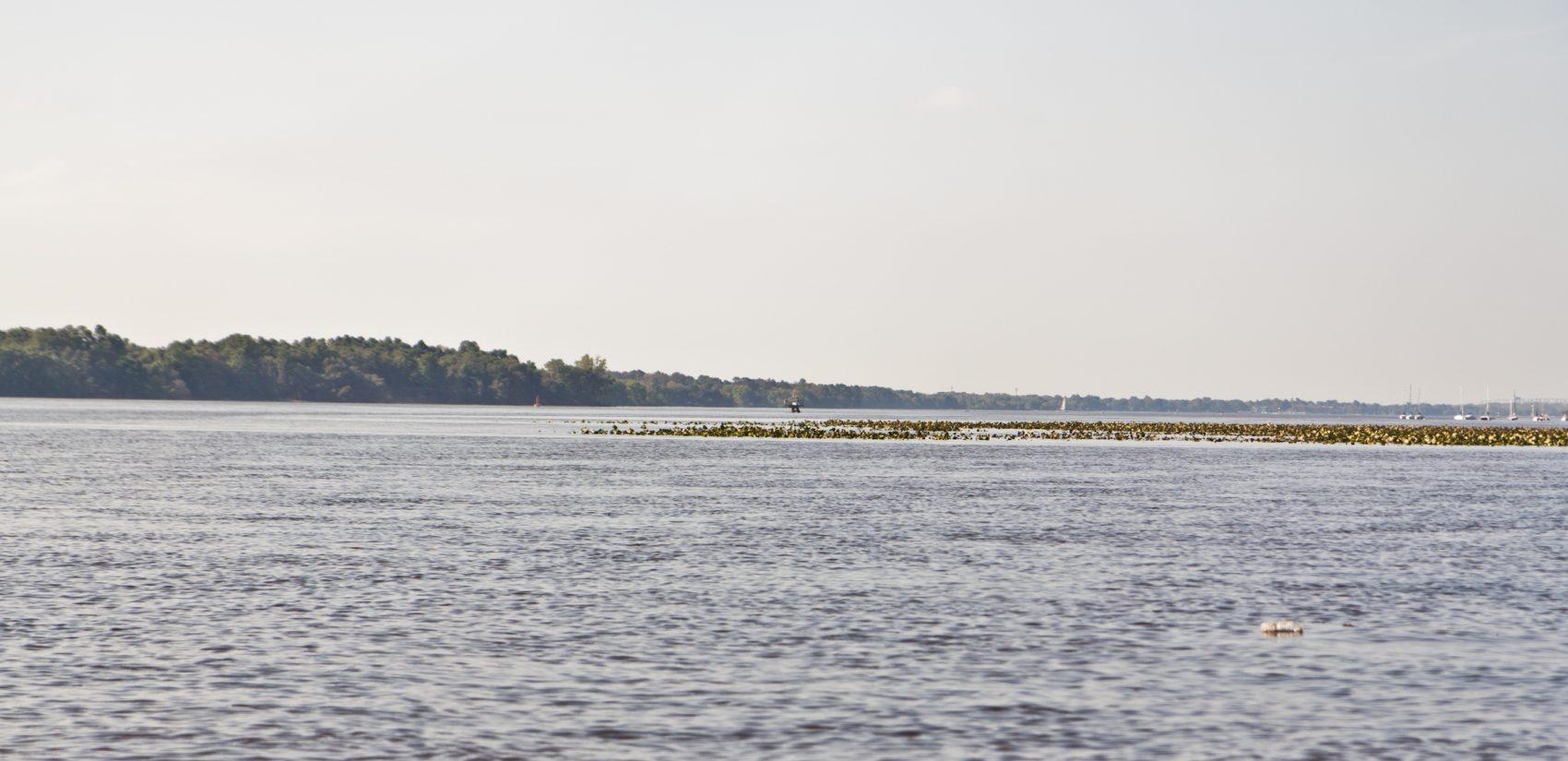 The Delaware River near the Neshaminy State Marina in 2018. (Kimberly Paynter/WHYY)