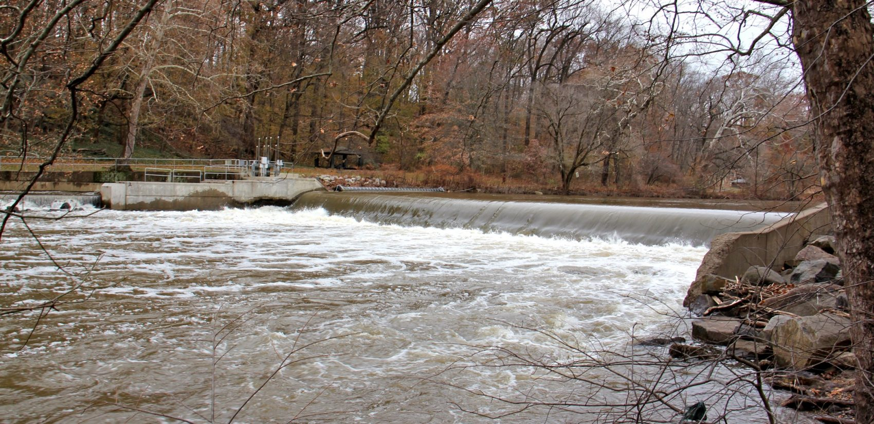 The Brandywine Creek in Wilmington, Delaware, shown here, is a tributary of the Christina River, which feeds into the Delaware River. Rising temperatures due to climate change could put the wildlife and aquatic life it supports at risk. (Emma Lee/WHYY)