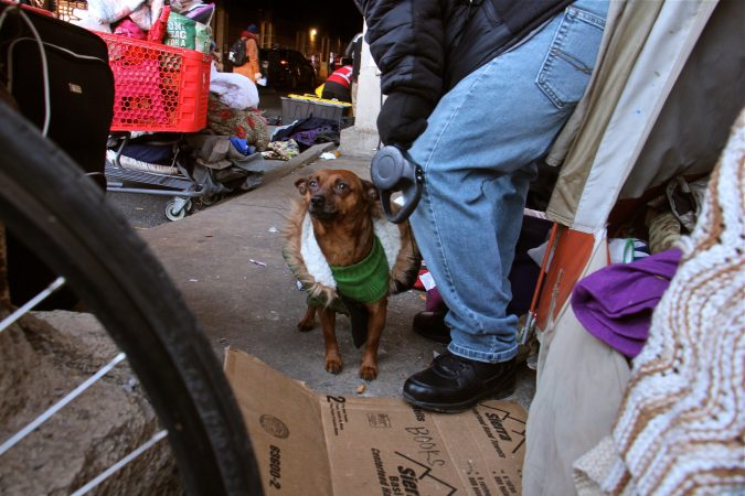 Chi-Chi, who lived in a tent on Emerald Street with his owners, was relocated to a shelter as well. (Emma Lee/WHYY)