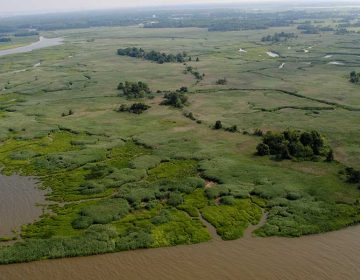 A 121-acre tract of land that will be integrated into the Supawna Meadows National Wildlife Refuge as part of a $4 million preservation purchase. (Image courtesy of Ducks Unlimited)