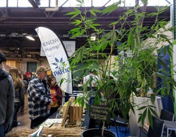Hemp displayed at the 2019 Pennsylvania Farm Show (Rachel McDevitt/WITF)