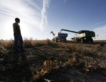 This photo taken Oct. 16, 2014, shows a farmer during harvesting of the grain milo just outside the town of Yuma in eastern Colorado. This small farming hamlet of 3,200 near the Nebraska border is home to an increasing number of Latino immigrants, drawn to work in the nearby corn and hog farms. The immigration issue represents a dilemma for Rep. Cory Gardner, R-Colo. in his race against Democratic Sen. Mark Udall in the only state among the dozen or so in play in this year's midterm election race with both a competitive Senate race and a sizable population of Hispanic voters. (AP Photo/Brennan Linsley)
