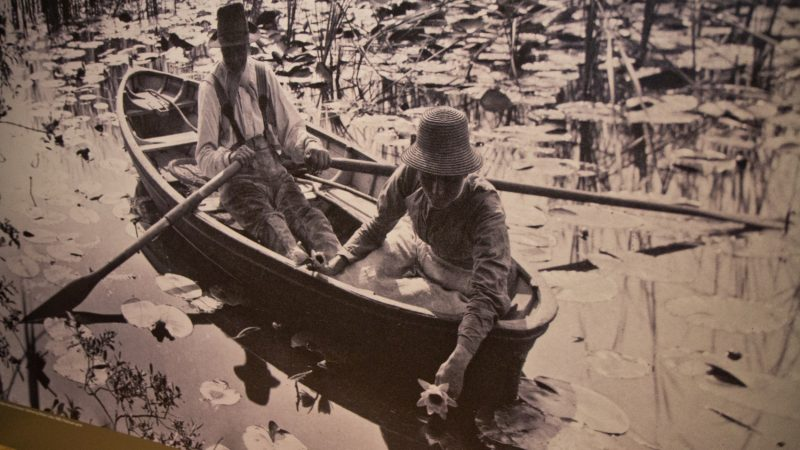 Peter Henry Emerson's Gathering Water Lilies, 1885. (Kimberly Paynter/WHYY)