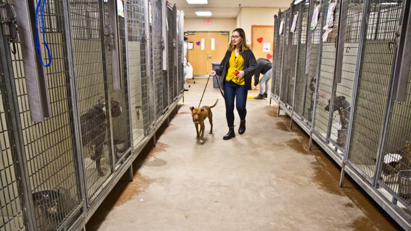 Morgan Polley, spokeswoman and development specialist with ACCT, walks Dee, a dog available for adoption at the main shelter. (Kimberly Paynter/WHYY)