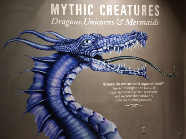 """The new """"Mythic Creatures"""" exhibit opens at The Academy of Natural Sciences of Drexel University on Saturday (Xavier Lopez for WHYY)"""